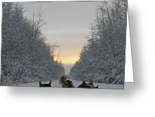 Mushing Into The Sunset Greeting Card