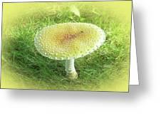 Mushroom - Amanita Muscaria Guessowii  Greeting Card