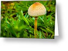 Mushroom And Grass Greeting Card