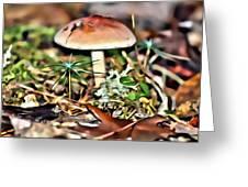 Mushroom And Moss Greeting Card