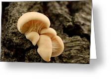 Mushroom Cluster Greeting Card