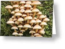 Mushroom Condo Greeting Card
