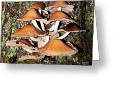 Mushroom Coven Greeting Card