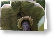 Mushroom Down Under  Greeting Card