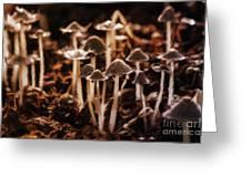 Mushroom Friends Greeting Card