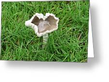 Mushroom Heart Greeting Card