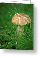 Mushroom In The Grass Greeting Card