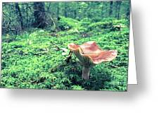 Mushroom In The Green Wood Greeting Card