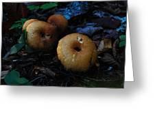 Mushroom Menagerie Greeting Card