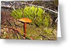 Mushroom Microcosm Greeting Card