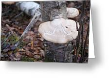 Mushroom On Birch Greeting Card