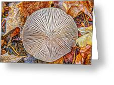 Mushroom On Fall Floor Greeting Card