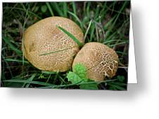 Mushroom Pair Greeting Card