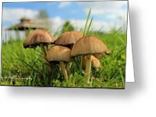Mushroom Greeting Card by Sheila Werth