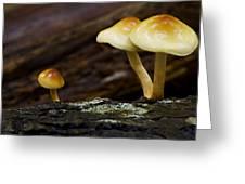 Mushroom Trio Greeting Card