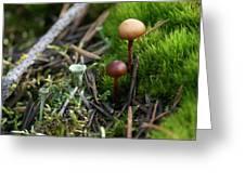 Mushroom Tundra Greeting Card