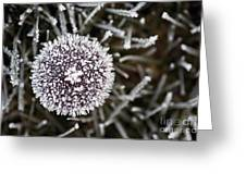 Mushroom With Ice Crystals Greeting Card