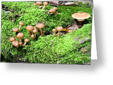 Mushrooms And Moss 2 Greeting Card