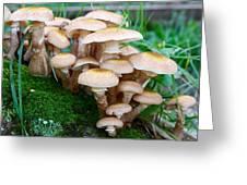 Mushrooms And Moss Greeting Card