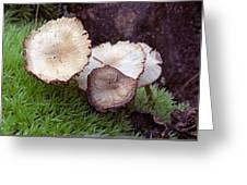 Mushrooms And Sphagnum  Greeting Card