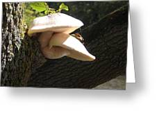 Mushrooms And Spider Web Greeting Card