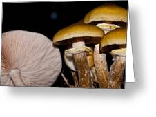 Mushrooms At Sundown Greeting Card
