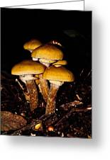 Mushrooms By Night Greeting Card