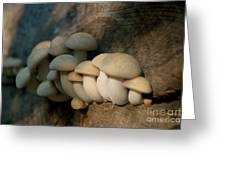 Mushrooms Growing Out Of Dead Tree Greeting Card