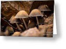Mushrooms Hidden Between The Leaves Greeting Card
