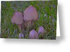 Mushrooms In Grass Greeting Card
