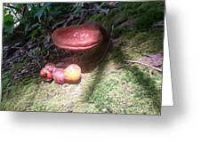 Mushrooms In Spotlight  Greeting Card