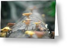 Mushrooms In The Trunk Greeting Card