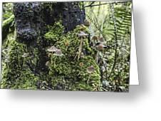 Mushroom Colony Greeting Card