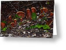 Mushrooms,log And Ferns Greeting Card