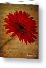 Musical Gerbera Greeting Card