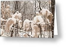 Muskoka Winter 6 Greeting Card