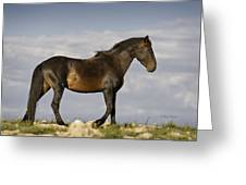 Mustang And Clouds 1 Greeting Card