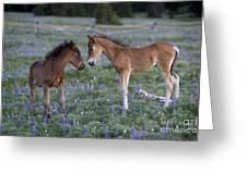 Mustang Foals Greeting Card