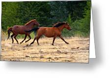 Mustang Gallop Greeting Card by Mike  Dawson