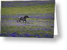 Mustang In Lupine 1 Greeting Card by Roger Snyder