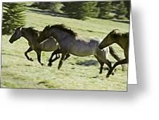 Mustang Mares Greeting Card