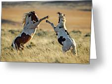 Mustang Rivalry Greeting Card
