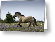 Mustang Running 2 Greeting Card
