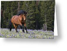 Mustang Stallion And Lupines Greeting Card