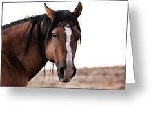 Mustang Stallion Greeting Card