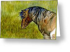 Mustang Stallion Greeting Card