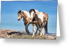 Mustang Twin Stallions Greeting Card