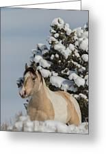 Mustang Winter Greeting Card