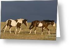Mustangs In Nevada Greeting Card