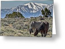 Mustangs In The Sierra Nevada Mountains Greeting Card